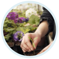 illustrationProductions horticoles (Fleurs et Légumes)
